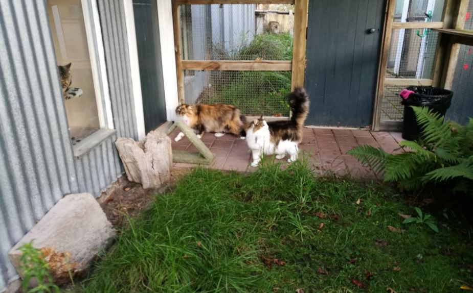 4 Paws Cat Motel Cattery Near Christchurch Airport